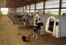 Meet CAEP Agriculture Hosts, Road View Dairy Farm
