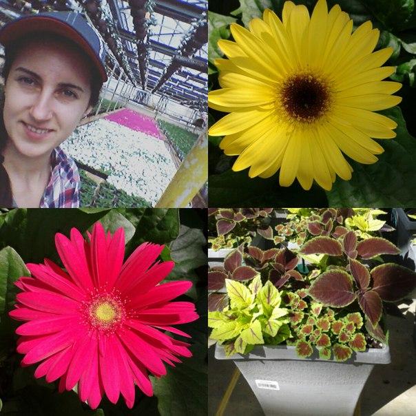 Viktoriia Kologryva, CAEP HorticultureInten fromUkraine