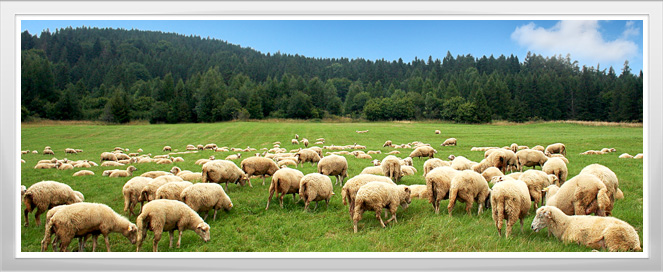 Sheep Management Training Program