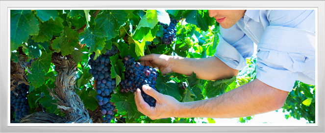 Viticulture Enology Training Program